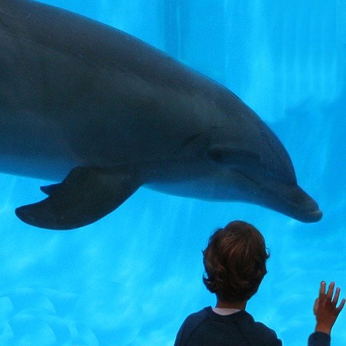 swimming with dolphins - dolphins vs humans