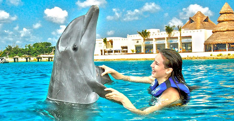 swimming with dolphins - day trips in cancun
